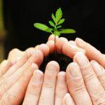 Organic-Business